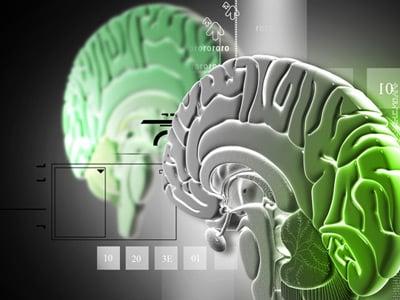 Stoffwechselkur - Beeinflussung des Hypothalamus