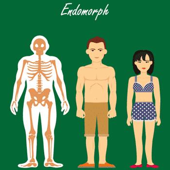 Der endomorphe Stoffwechseltyp - Skelette, Mann, Frau