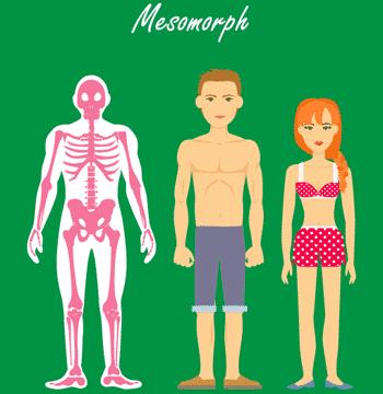 Der mesomorphe Stoffwechseltyp - Skelette, Mann, Frau